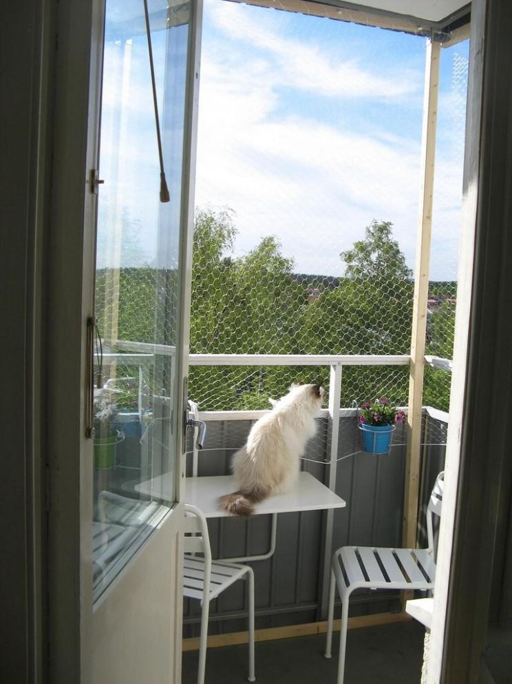 Balcony enclosure  Casita para gatos, Ventana de gato, Gatos - Apartment Balcony Enclosure Ideas