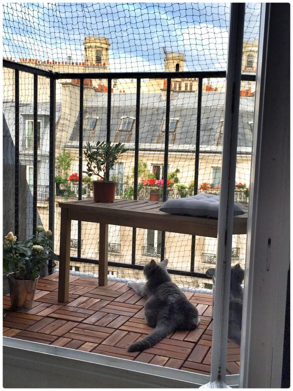 Paris balcony cattery  Cat patio, Cat apartment, Cat proof balcony - Apartment Balcony Enclosure Ideas