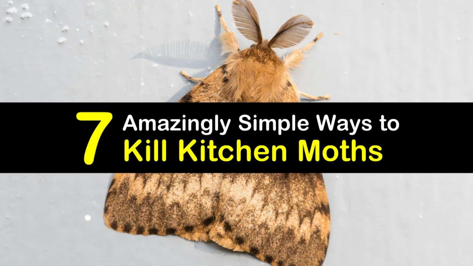 8 Amazingly Simple Ways to Kill Kitchen Moths - Moths In Kitchen Cabinets