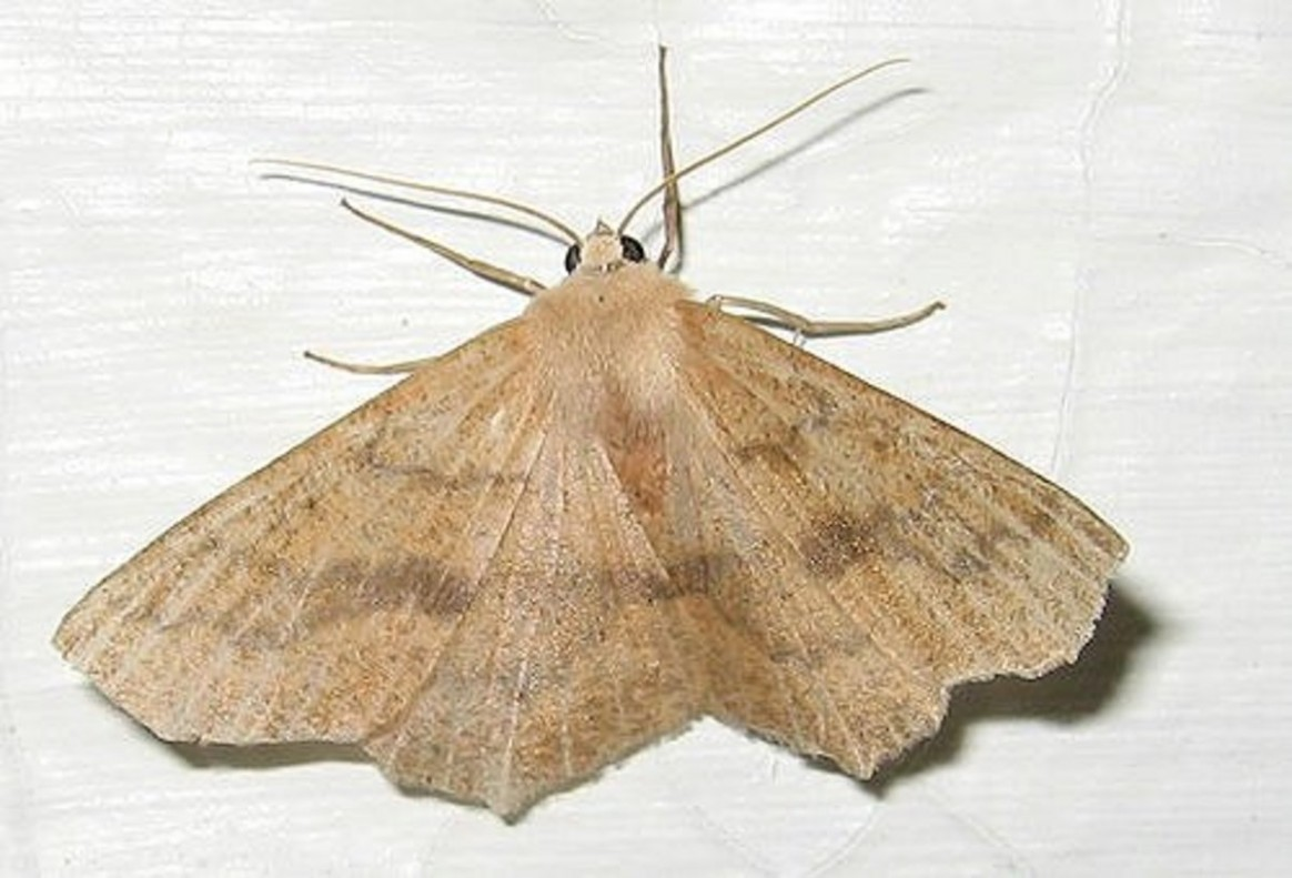 How to Get Rid of Pantry Moths in Your Kitchen Cupboards  - Moths In Kitchen Cabinets